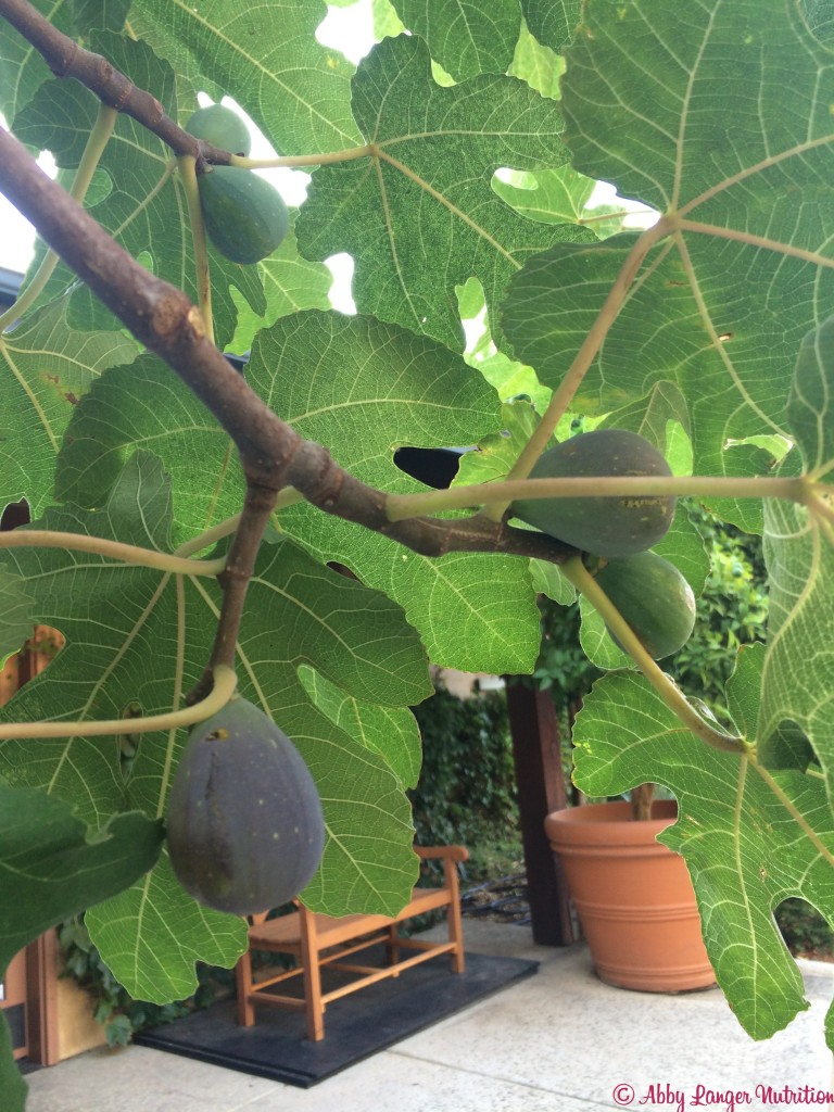 Almond Orchard Figs
